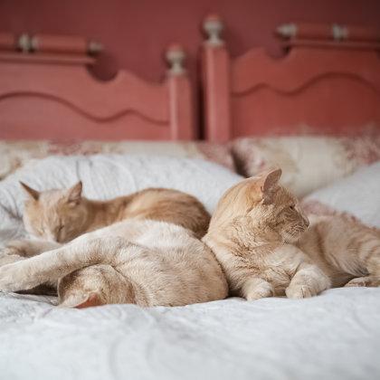 Desmit kaķi